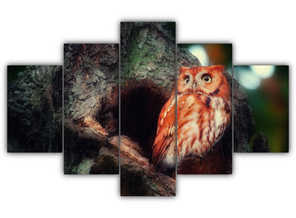 Multi Panel Mighty Owl Split Grouped Wall Canvas Art