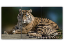 Load image into Gallery viewer, Tiger With Blue Eyes