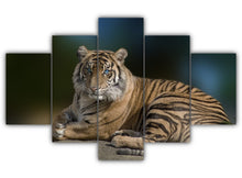 Load image into Gallery viewer, Multi Panel Tiger With Blue Eyes Split Grouped Wall Canvas Art