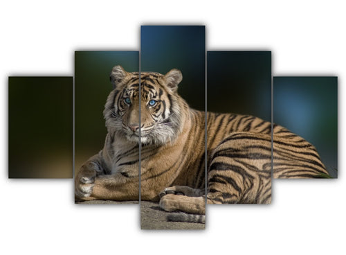 Multi Panel Tiger With Blue Eyes Split Grouped Wall Canvas Art