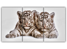 Load image into Gallery viewer, Tow cute white tiger cubs