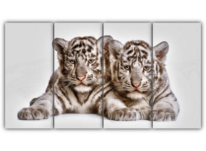 Tow cute white tiger cubs