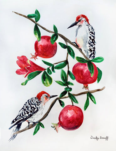 Red Bellied Wood Pecker with Pomegranate