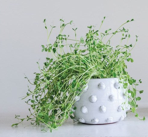 White Raised Dot Planter