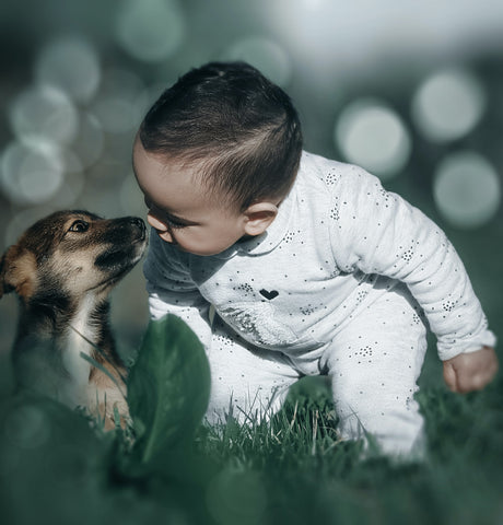 Pet Dog With Baby