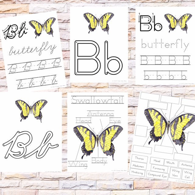Anatomy of Butterfly Poster & Handwriting Kit