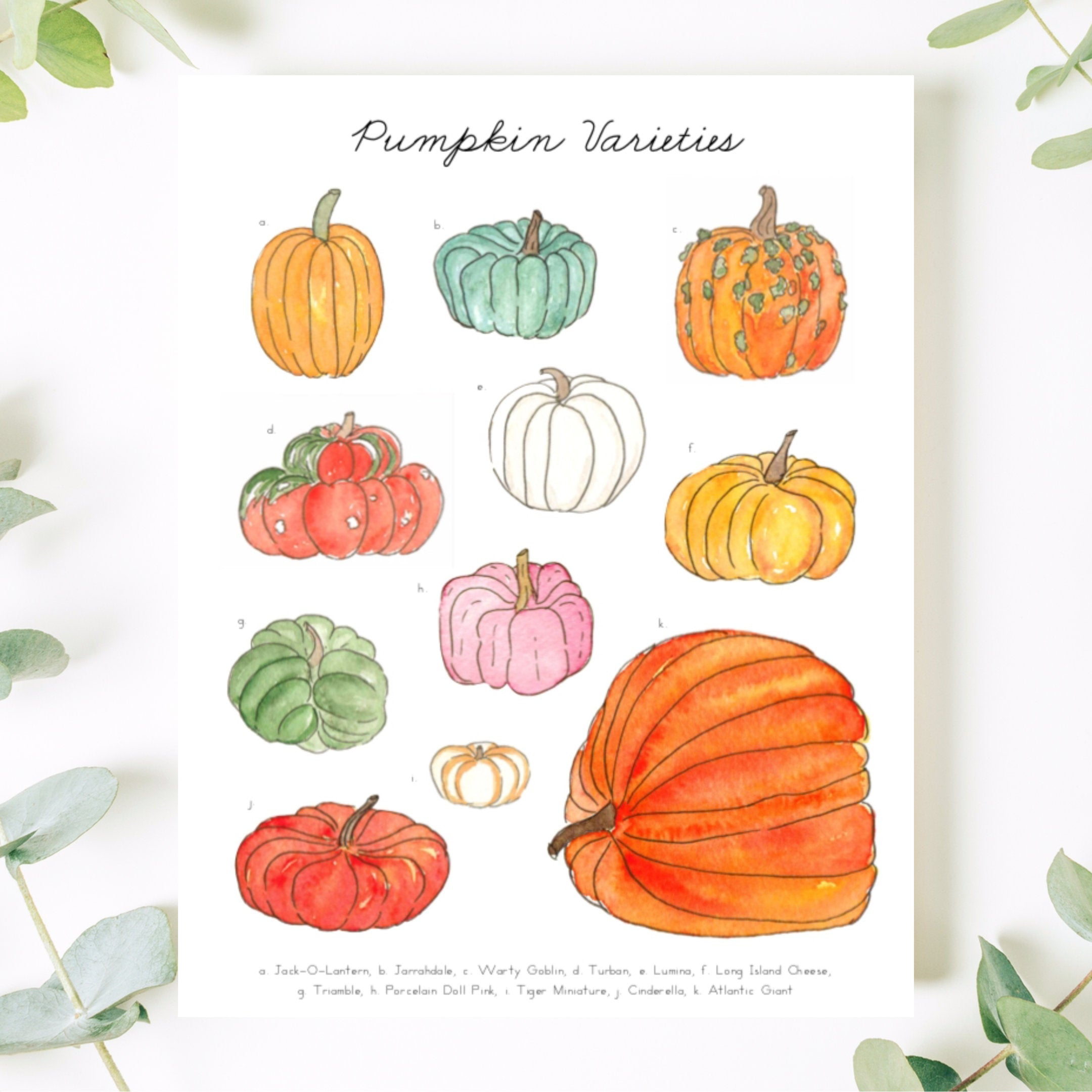 Pumpkin Varieties