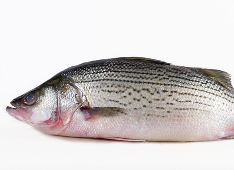 Farmed Striped Bass