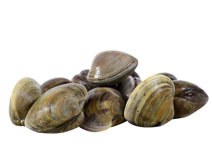 LITTLE NECK CLAM
