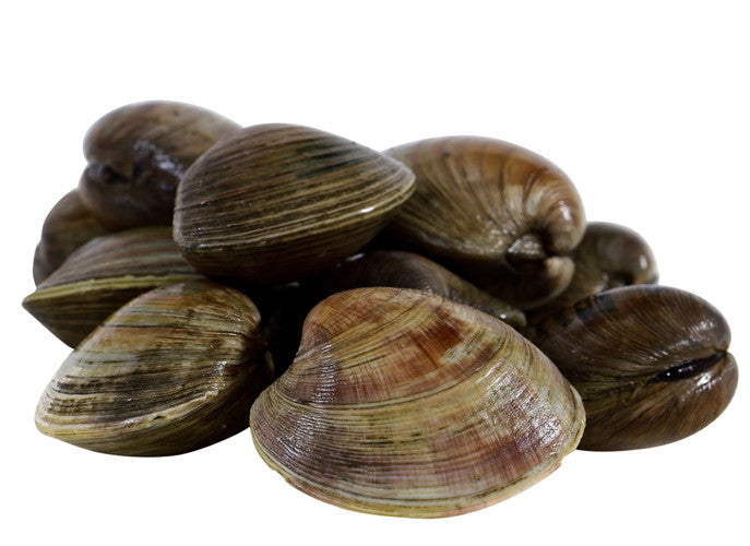 TOPNECK CLAMS