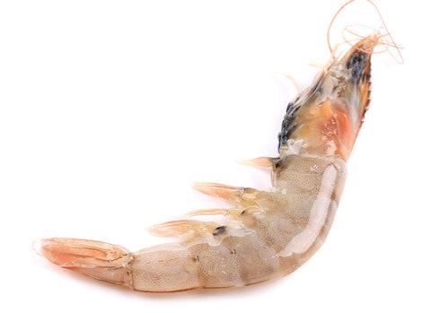 HEAD-ON JUMBO WHITE SHRIMP (7/10 CT)