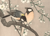 Japanese Print Japanese Prints for sale Japanese Woodblock Print Japanese Art Tits on Cherry Branch - Ohara Koson