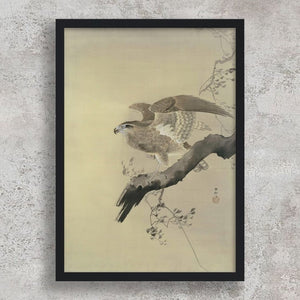 Havik - Ohara Koson - Cityofparadise - Japanese Print - Japanese Prints for sale - Japanese Woodblock Print