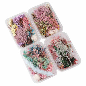 1 Box Real Pressed Flower Leaf Dried Daisy Flower Resin  Epoxy Mold Fillings