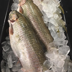 RAINBOW TROUT 8 oz.