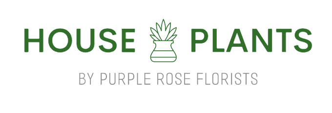 House Plants by Purple Rose Florist