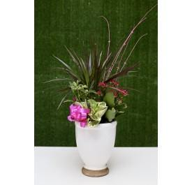 Delightful Tower Dish Garden - House Plants by Purple Rose Florist