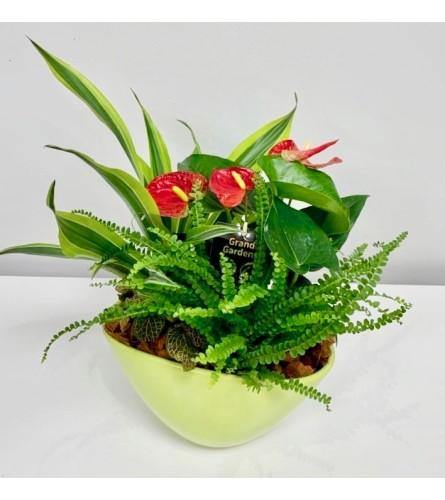 Wispy Wonder Garden Plant in Ceramic Pot