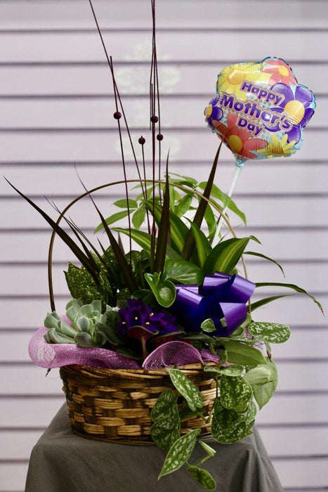 Charming Dish Garden with Balloon