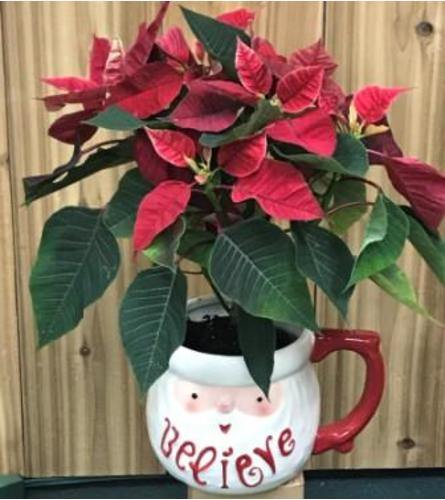 Desk Top Christmas Sprite - House Plants by Purple Rose Florist