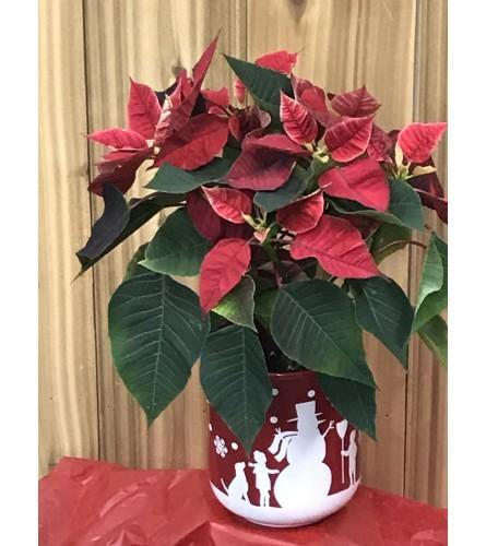 Christmas Poinsettia Desk Top Ornament - House Plants by Purple Rose Florist