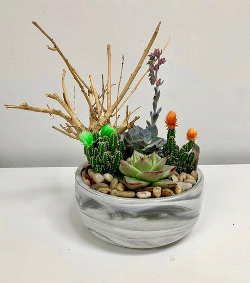 Desert Succulent Cactus Garden in Grey & White Marbled Pot - House Plants by Purple Rose Florist