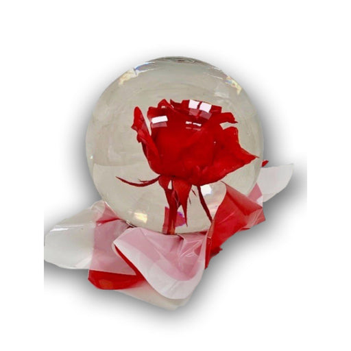 Regal Red Rose in Glass Orb - House Plants by Purple Rose Florist