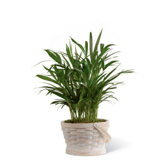 The FTD® Deeply Adored Palm Planter
