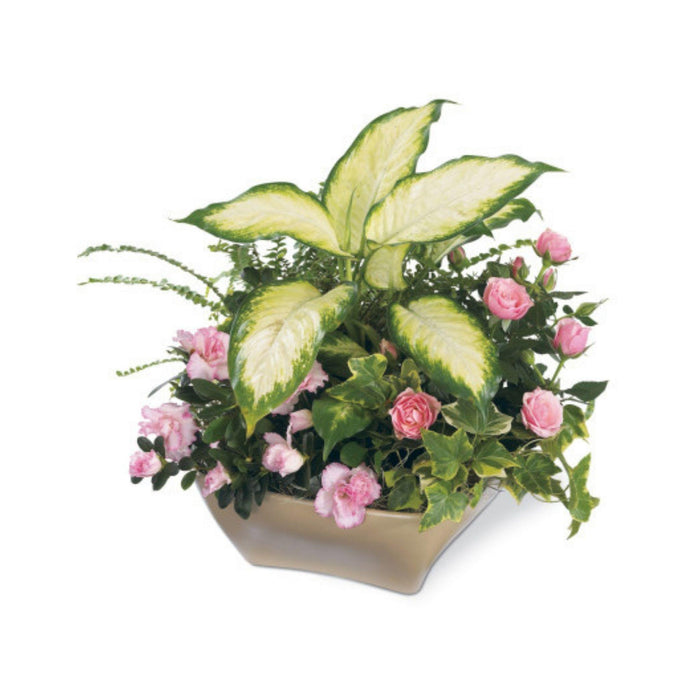 The FTD® Garden of Grace Planter - House Plants by Purple Rose Florist