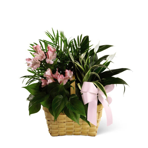 The FTD® Living Spirit Dishgarden - House Plants by Purple Rose Florist