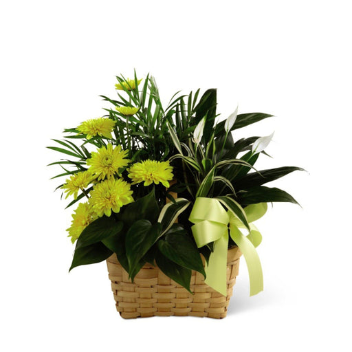 The FTD® Loving Light Dishgarden - House Plants by Purple Rose Florist