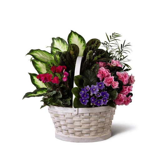 The FTD Peaceful Garden Planter - House Plants by Purple Rose Florist
