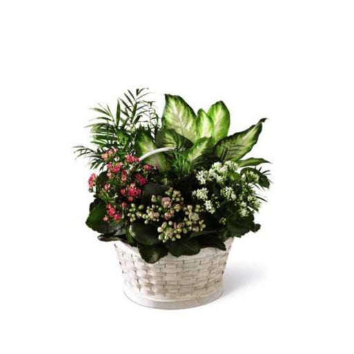 The FTD Rural Beauty Dishgarden - House Plants by Purple Rose Florist