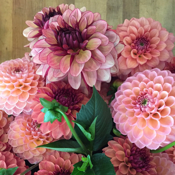 Paper-Wrapped Dahlias for Pick Up
