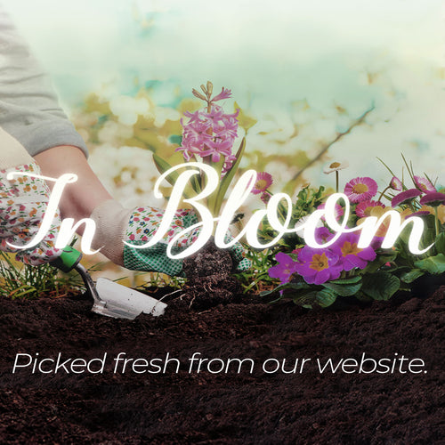 In Bloom Collection - Picked fresh from our website.