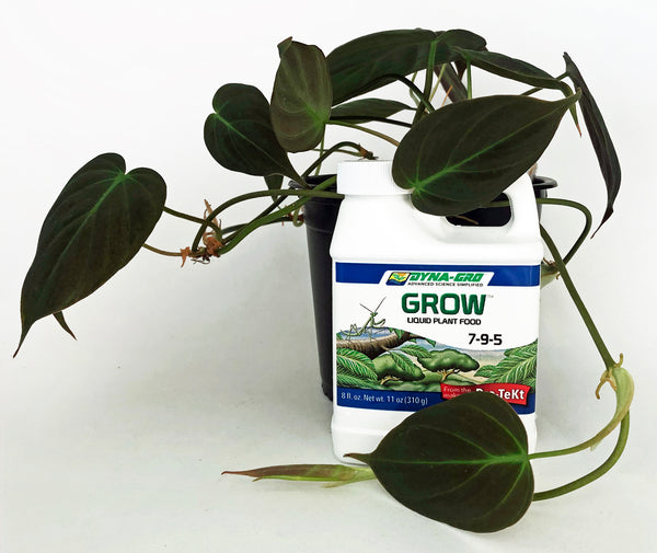 Bottle of Dyna Gro GROW formula beside a Philodendron Micans plant