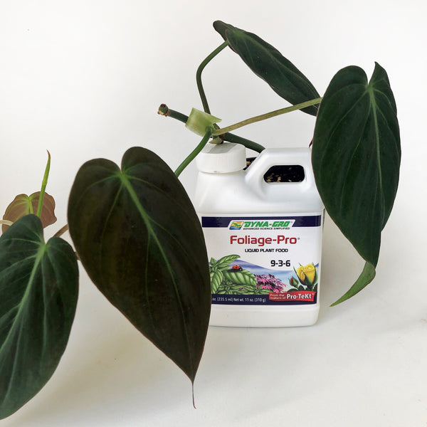 dyna gro foliage pro beside philodendron micans plant