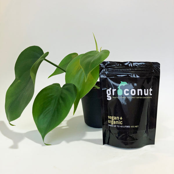 Groconut plant food in a pouch beside a baby Philodendron Heartleaf plant