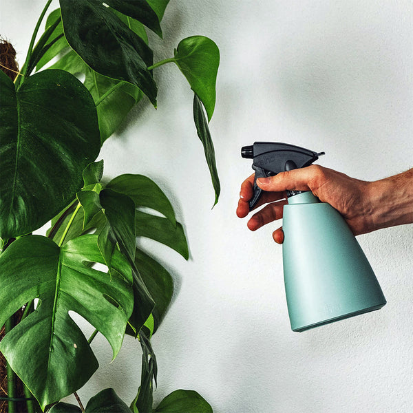 man's hand holding a plant mister bottle spraying a monstera plant
