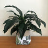 Orchid & Fig Reversible Cover Pot - Jungle Palm - SOLD OUT