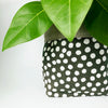 LIMITED EDITION Orchid & Fig Reversible Cover Pot - Olive Dots - SOLD OUT