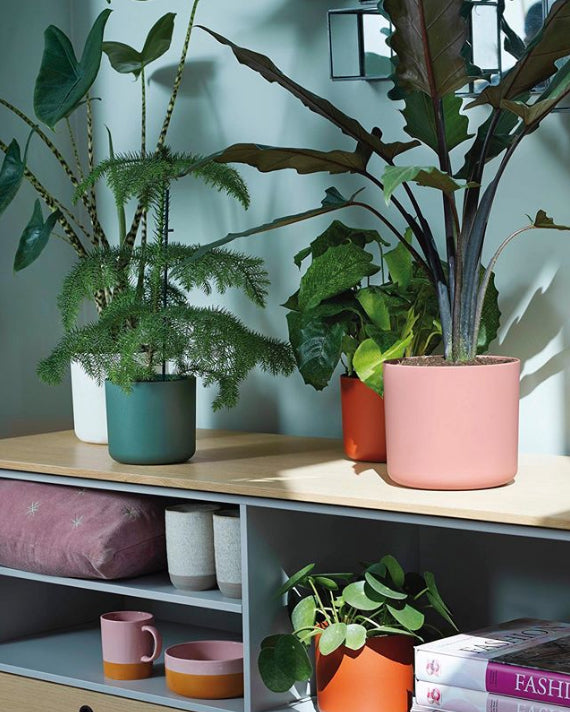 Shelf with a range of Elho B.For Soft cover pots in white, green, brick and pink with plants in them
