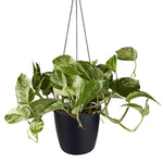 Hanging Pot - Elho Brussels - 18cm Black