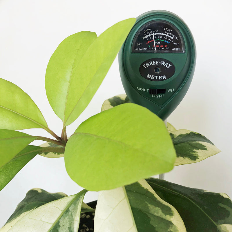Crew water pH and light meter for plants