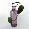 Love That Leaf Tall Propagation Vase - Amethyst