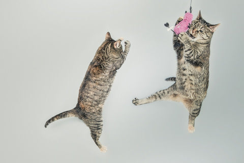 Two cats jumping in the air