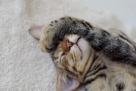 Cat napping, with paw covering eyes.