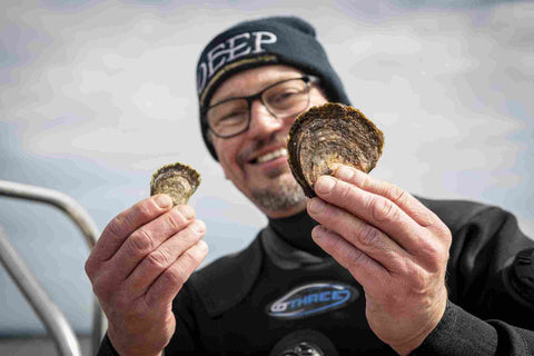 Prof Bill Sanderson compares growth of native European oysters in past DEEP project deployment with the latest batch