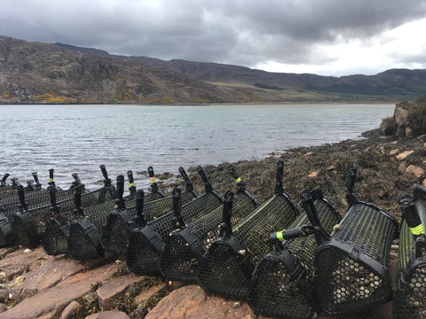 6000 Native Oysters for Restoration