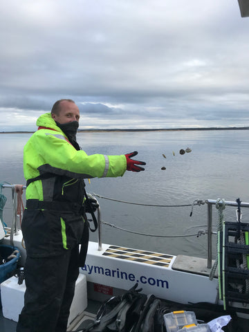 Rewilding in Action - Native Oysters in the Dornoch Firth